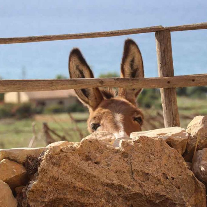 Donkey in Cofano national park